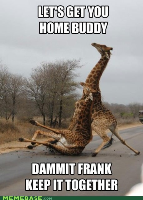Drunk Meme - Giraffe says C'mon FRANK, keep it together, you are drunk