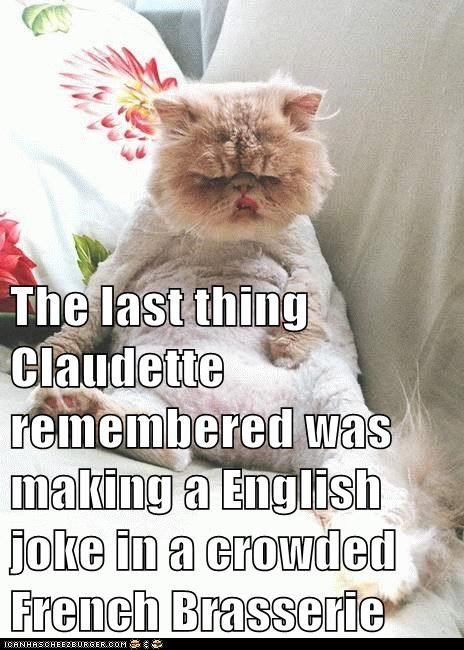 Cheezburger Image 6655073536