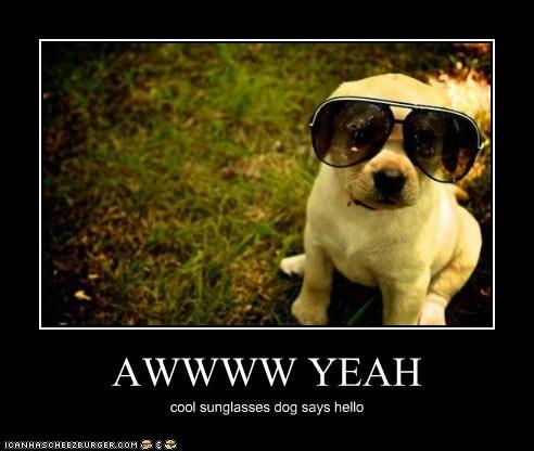 AWWWW YEAH cool sunglasses dog says hello