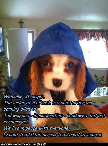 dogs hood spaniel saint monks - 6655755776