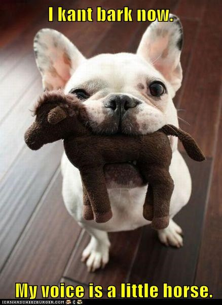voice,dogs,toy,stuffed animal,french bulldogs,horse