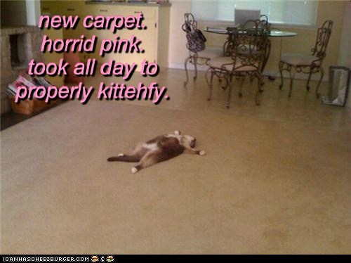 new carpet. horrid pink. took all day to properly kittehfy. new carpet. horrid pink. took all day to properly kittehfy. new carpet. horrid pink. took all day to properly kittehfy.