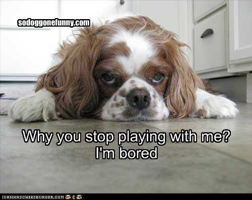 Why you stop playing with me? I'm bored sodoggonefunny.com