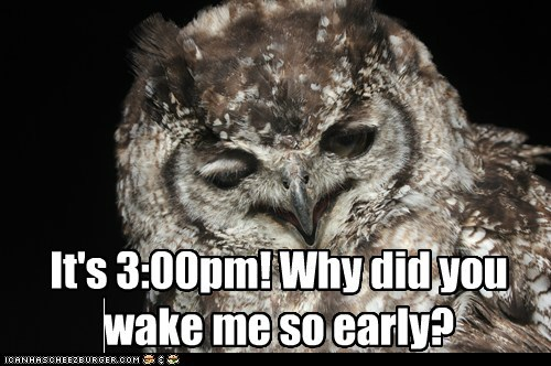 wake up,cranky,nocturnal,tired,Owl,early,afternoon
