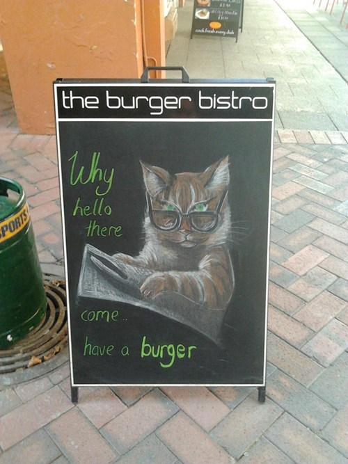 Cats,sign,lolcats,bistro,can has