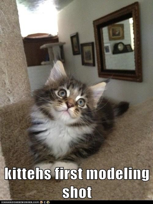 model photograph photogenic pose Cats captions - 6656483840
