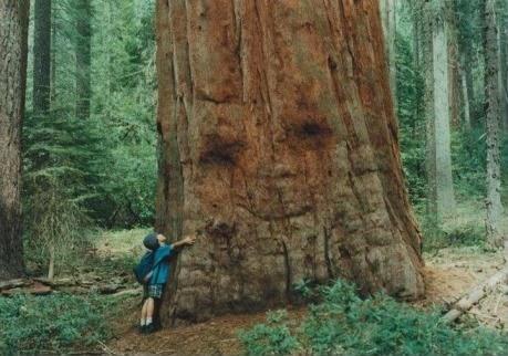 trees hugs smile redwood - 6656528128