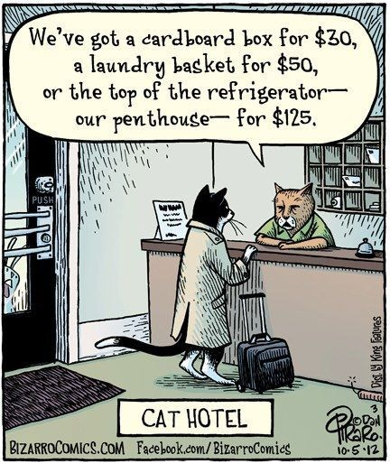 comics,illustrations,bizarro comics,hotels,Cats,boxes,motels,baskets,refrigerators