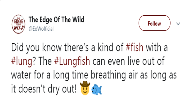 tweets about the animal kingdom