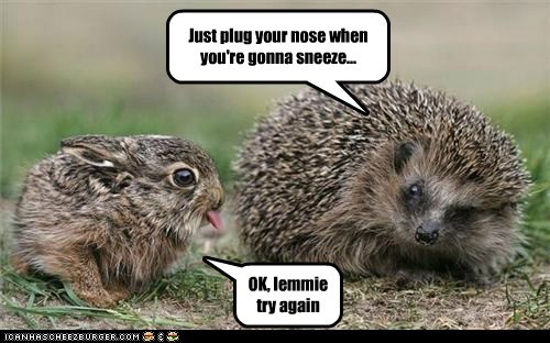 annoyed,try again,sticking tongue out,hedgehog,sneeze,bunny