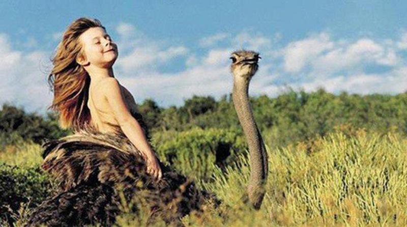 kids raised parenting story animals - 6657285