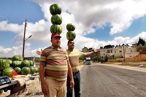 balance watermelon fruit business - 6657404416