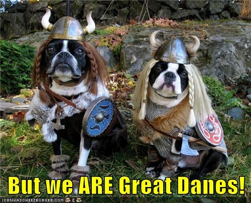 costume,dogs,great danes,vikings,the danes,boston terrier
