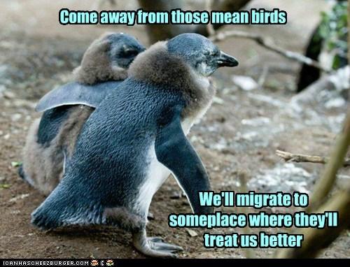 hope birds penguins leaving comfort mean - 6658349824