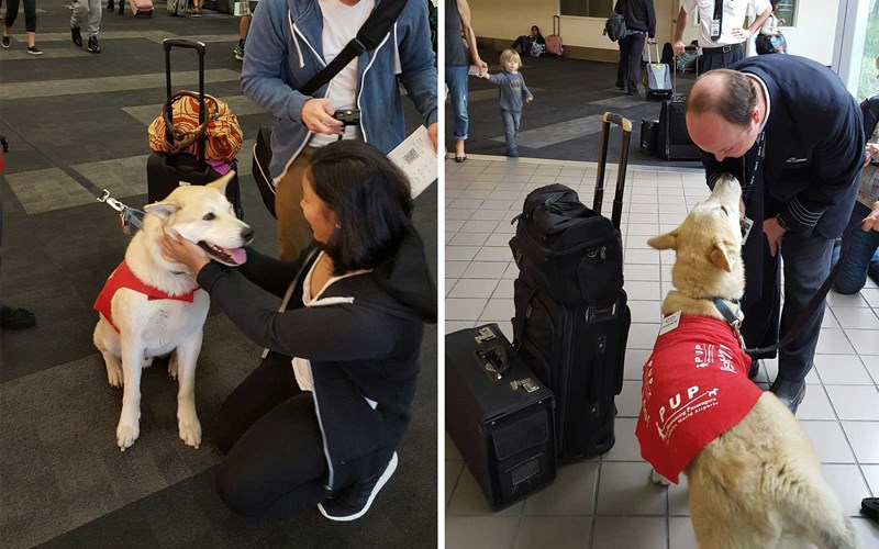 airports flight stress cuddling animals - 6658821