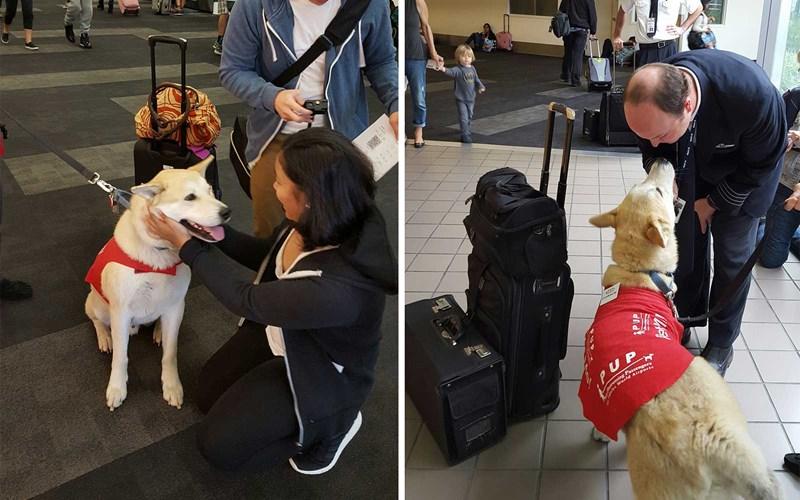 airports flight stress cuddling animals - 6658821