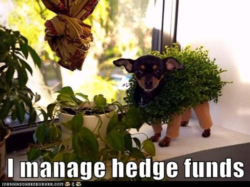 I manage hedge funds