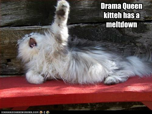 Drama Queen kitteh has a meltdown