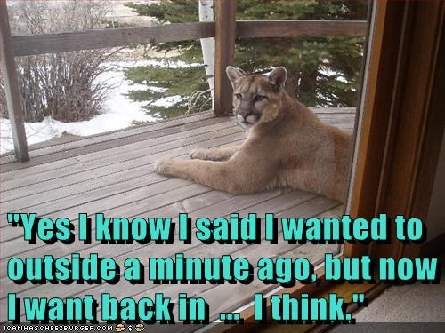 want in cat mountain lion cougar outside indecisive - 6659050752