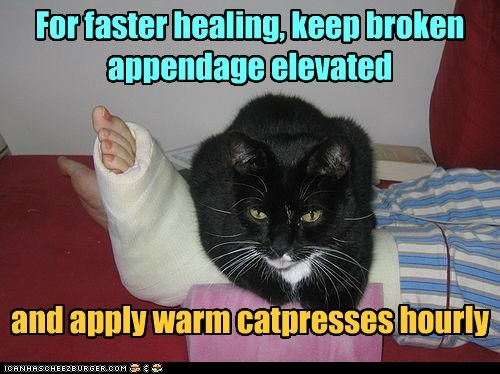 For faster healing, keep broken appendage elevated and apply warm catpresses hourly