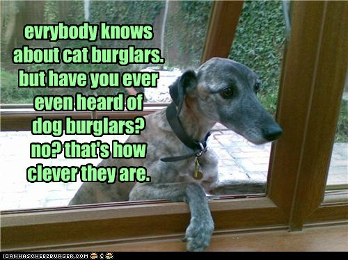 evrybody knows about cat burglars. but have you ever even heard of dog burglars? no? that's how clever they are.