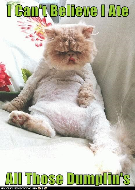 i-cant-believe fat lazy food nom dumplings Cats captions - 6659312640