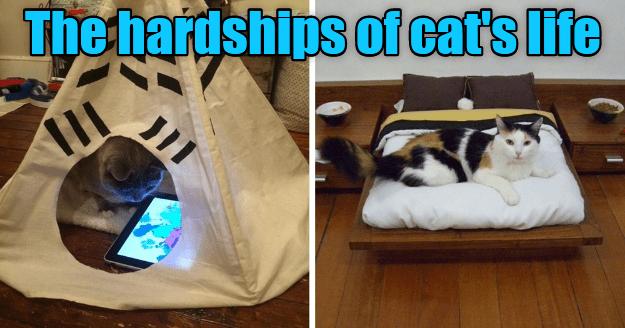 funny memes Memes animal memes cat memes - 6659333