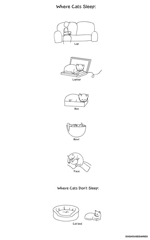 Cats,sleeping,inconvenient,comfort is relative,cat beds,comics,doghouse diaries