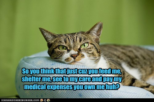 own,property,Cats,captions,feed,shelter,care,pay,medical expenses,medical
