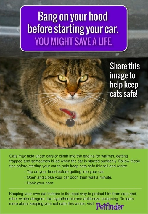 Cats psa winter cars information knowledge safety lolcats - 6659721984