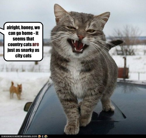 drive country city captions snarky Cats home vacation