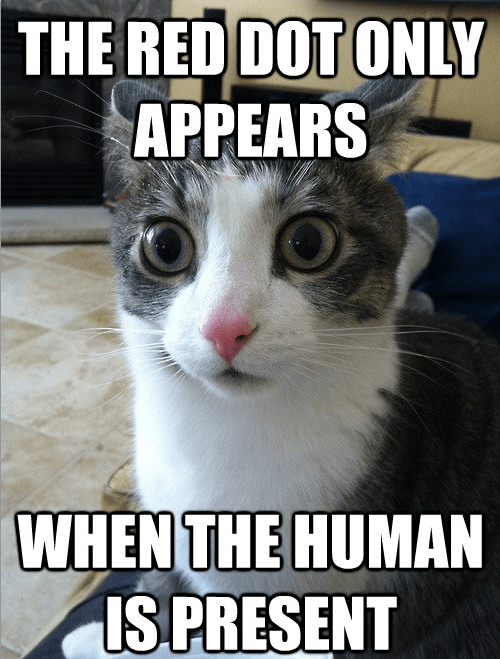 Cats Memes sudden clarity sudden clarity cat clarity red dot laser pointers realization captions lolcats