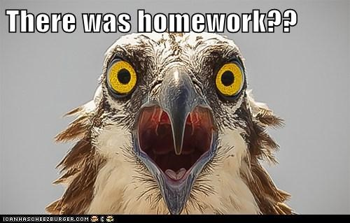 eagle,homework,school,that feel,panic,shocked