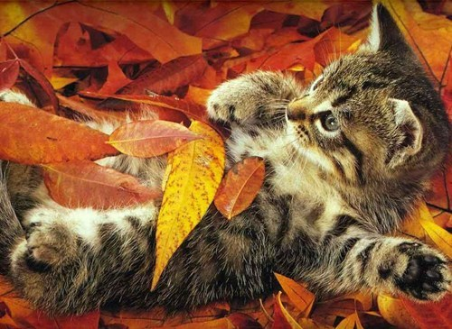 Cats,kitten,cyoot kitteh of teh day,fall,autumn,leaves,seasons,nature,lolcats