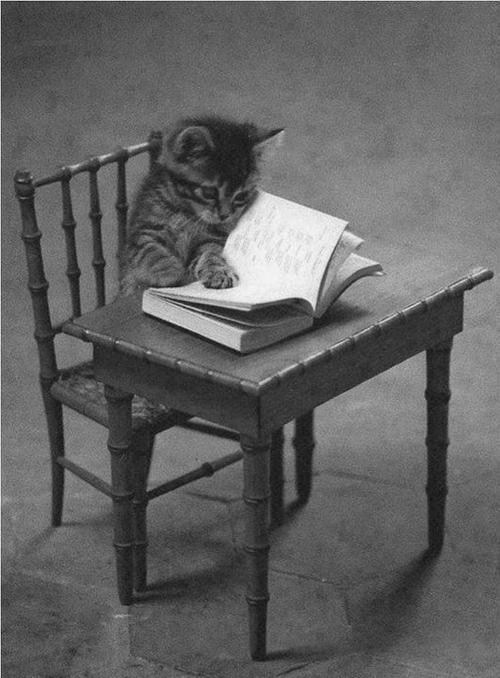 Cats,kitten,cyoot kitteh of teh day,books,desks,reading,school