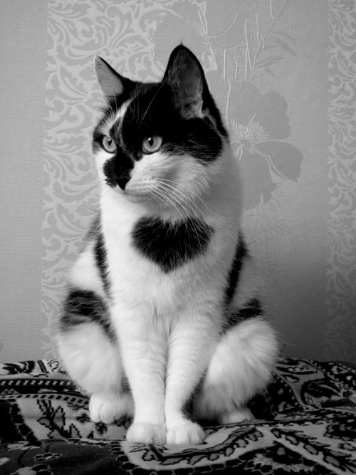 Cats kitten cyoot kitteh of teh day hearts fur patterns love - 6660105984