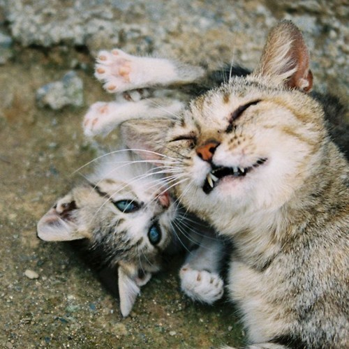 Cats,kitten,cyoot kitteh of teh day,moms,mama,playing,smiling
