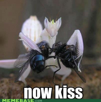 flies,bugs,praying mantis,food,now kiss