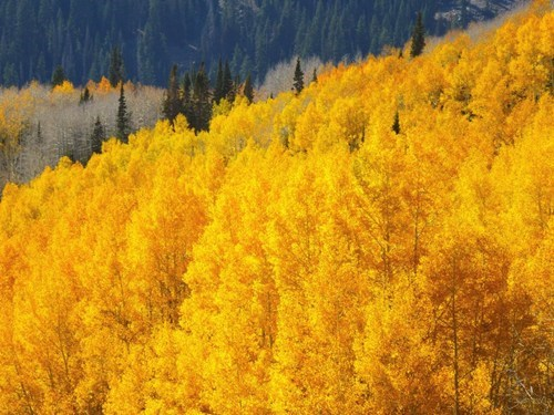 fall,landscape,leaves,pretty colors,seasons,mountains