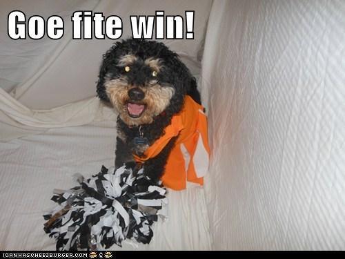 Goe fite win!