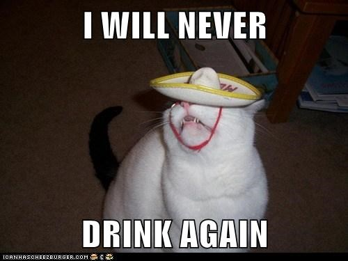 tequila drink drunk alcohol Cats captions - 6661216256