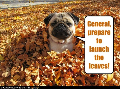 General, prepare to launch the leaves!