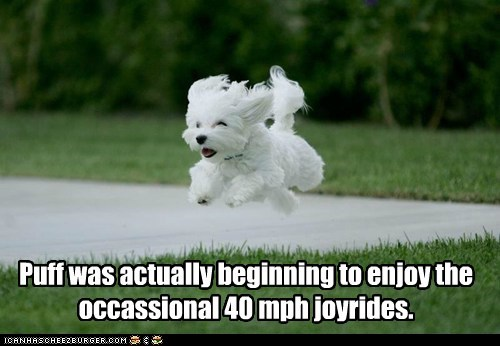Puff was actually beginning to enjoy the occassional 40 mph joyrides.