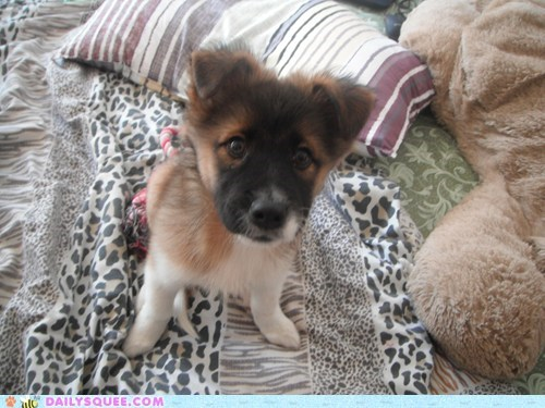 reader squee puppy pet dogs squee rescue - 6661784320