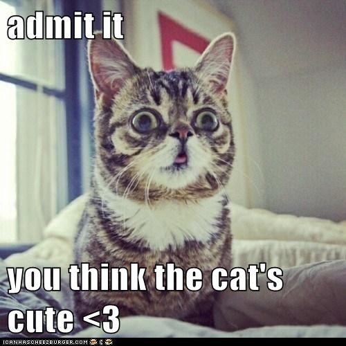 admit it  you think the cat's cute <3