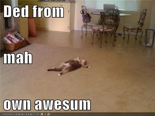 floor,awesome,captions,dead,pass out,Cats