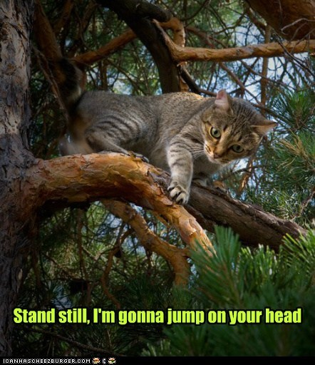 stand still,jump,warning,head,surprise,Cats,captions