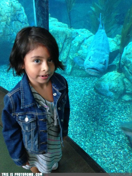 fish kid animal aquarium - 6662337792