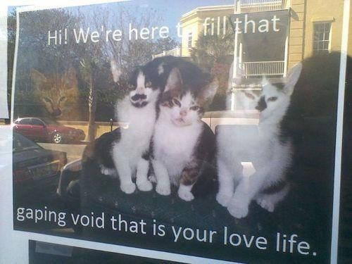 Cats forever alone love life - 6662349824