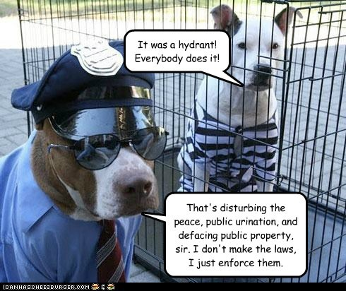 costume dogs jail criminal pitbull arrested police officer